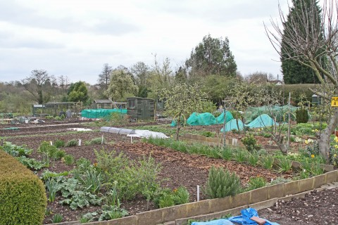 Wood Lane Allotments