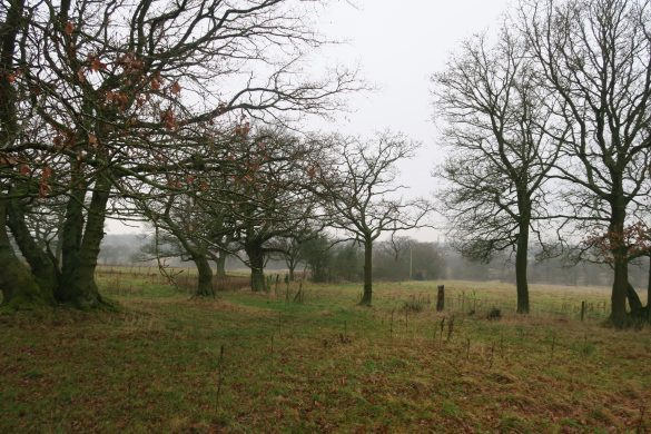 Winter countryside view with leafless trees